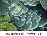 Growing coral garden overlapping each other, Coral Bay, Western Australia.