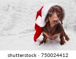 Stock photo dog and cat and kitens wearing a santa hat 750024412