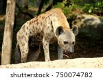 hyena is looking at something...   Shutterstock . vector #750074782