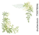 floral hand drawing  green leaf ... | Shutterstock . vector #750078046
