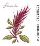 amaranthus or amaranth. vector... | Shutterstock .eps vector #750155176