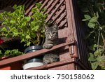 my cat thinks she's a flower or ...   Shutterstock . vector #750158062