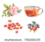 set of rosehips watercolor. tea ... | Shutterstock . vector #750200155