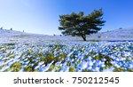 tree and nemophila flower at... | Shutterstock . vector #750212545