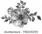 beautiful flower hand drawn... | Shutterstock . vector #750235255