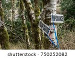 Small photo of Pump Chance : Pump chance signage attached to trees in the woods near a clear-cut.