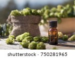 hop humulus dry medical herb... | Shutterstock . vector #750281965