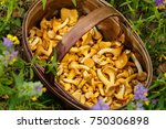Mushrooms Chanterelle In The...