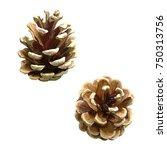 Pine Cones  Christmas Tree....