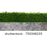 green tree wall fence with... | Shutterstock . vector #750348235
