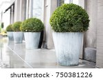 side perspective on a row of... | Shutterstock . vector #750381226