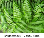 Natural Fern Leaf Bush Closeup...