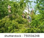 many egret are on the tree. | Shutterstock . vector #750536248