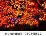 Red Maple Tree Leaves In Autum...