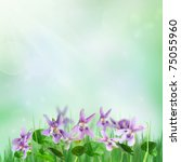 Spring background with beautiful forest violets and rays of light - stock photo