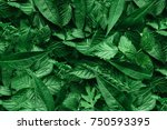 creative layout made of green... | Shutterstock . vector #750593395