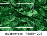 creative layout made of flowers ... | Shutterstock . vector #750594208