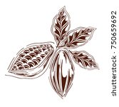 cocoa logo in styles free hands ... | Shutterstock .eps vector #750659692
