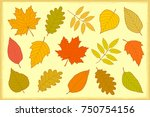 decorative set of hand drawn... | Shutterstock . vector #750754156