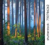 foggy sunrise in the beautiful... | Shutterstock . vector #750786262