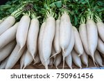 close up of fresh white radish. | Shutterstock . vector #750961456