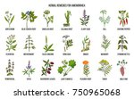 best herbal remedies to treat... | Shutterstock .eps vector #750965068