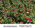Flowerbed With Colorful Flower...