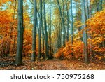 autumn trees in the forest   Shutterstock . vector #750975268