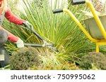a woman pruned plants in the... | Shutterstock . vector #750995062