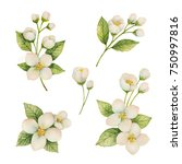 watercolor set of flowers and... | Shutterstock . vector #750997816