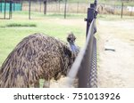 Emu Bird With Big Brown...