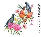 watercolor  australian floral... | Shutterstock . vector #751014088