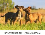 Stock photo puppies with merry eyes in among the green grass 751033912