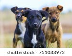 cute puppies are looking at the ... | Shutterstock . vector #751033972