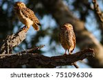 selective focus on a couple of ...   Shutterstock . vector #751096306