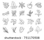 vintage hand drawn herbs and... | Shutterstock . vector #751170508