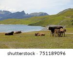 cow family at the lake | Shutterstock . vector #751189096