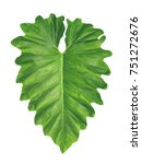 philodendron  elephant ear ... | Shutterstock . vector #751272676