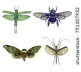 big set of insects  bugs ... | Shutterstock .eps vector #751307932