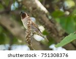 bird on branches of trees ... | Shutterstock . vector #751308376