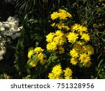 beautiful yellow flowers nature ... | Shutterstock . vector #751328956