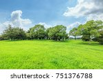Green Grass And Forest...