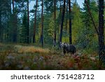 bear hidden in dark forest.... | Shutterstock . vector #751428712