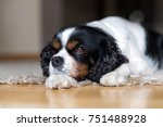 cute dog lying on the floor and ...   Shutterstock . vector #751488928