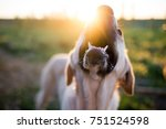 portrait of a dog at sunset in... | Shutterstock . vector #751524598