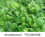 fresh green baby spinach leaves ... | Shutterstock . vector #751560538