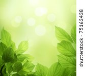 fresh and green leaves   Shutterstock . vector #75163438