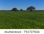 colorful landscape  pampas ...   Shutterstock . vector #751727026