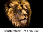 Stock photo lion head 751732252