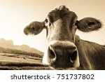 funny cow at the kaisergebirge... | Shutterstock . vector #751737802